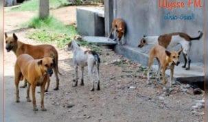 رمادة :الكلاب السائبة تهدد الثروة الحيوانية