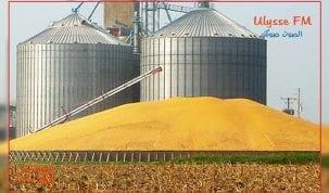 تخزين-الحبوب